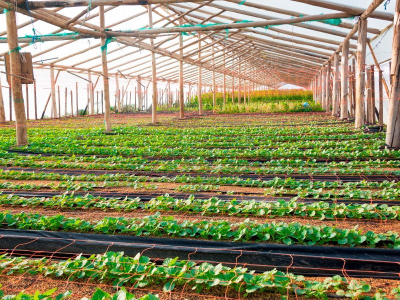 FICHAS-AGROTURISMO-VOLUNTARIADO
