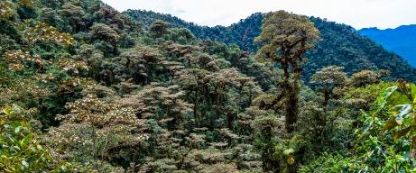 Reserva Orquideológica Pahuma